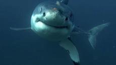 Shark attack at Baylys Beach