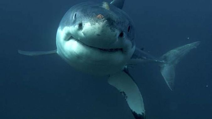 A man has been attacked by a shark in the water at Baylys Beach, near Dargaville. Photo / NZ Herald