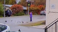 Queenstown motorist mows down ducklings despite warning