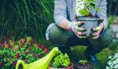 Gardening: Lemon Tree Borer