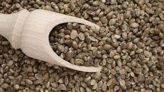 Kaytee Boyd: The health benefits of hemp seeds