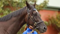 Code cracked: Why this horse will win Melbourne Cup