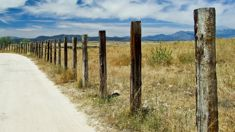 Lyn Mayes: Kiwi company turning plastic bags into fence posts