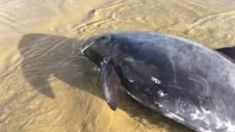 Six pygmy whales refloated in Northland