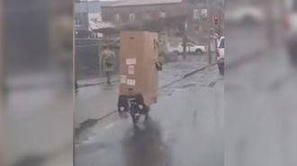 Wellington cyclists goes viral with cardboard raincoat