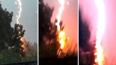 Watch: Incredible moment lightning strikes tree, explodes
