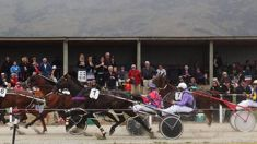 Harness racing accused will go to trial