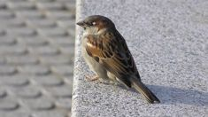 Pak'nSave defends poisoning sparrows to get rid of them