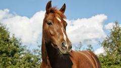 PETA no longer wants you to say 'beat a dead horse'. (Photo / Getty)