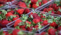 Ruud Kleinpaste: How to grow your own strawberries