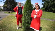 Auckland Council ban pair from selling Christmas trees