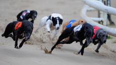 NZ greyhound racing industry 'killing a dog a day for gambling profits'