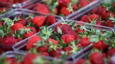 Woman charged after falsely reporting a needle in a strawberry