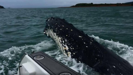 Auckland couple have close encounter with humpback whale