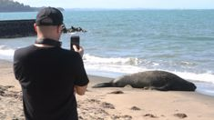 Elephant seal pays visit to Auckland's Mission Bay