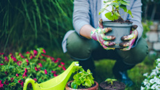 Gardening tips for the Christmas break