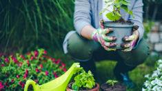 Gardening tips for the Christmas break