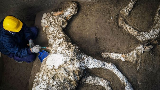 Several nearly intact horses were discovered by archaeologists. (Photo / AP)
