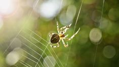 Aussie man sparks police callout after screaming at spider
