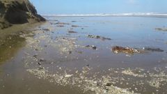 90 Mile Beach is strewn with rubbish in this picture, including small pieces of plastic. (Photo / Supplied)