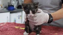 Kitten thrown out of moving car in Christchurch