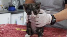Kitten thrown out window of moving car in Christchurch