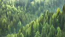Booming forestry industry struggling to find workers