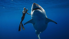 Watch: Incredible footage of great white shark encounter