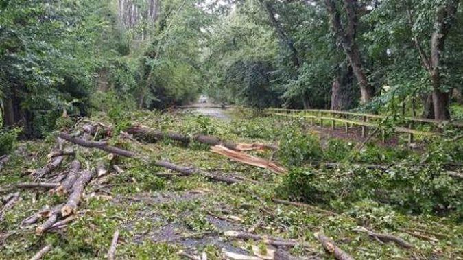Trees down on Speargrass Flat Road, near Queenstown. (Photo / Matt Pitt)