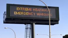 Shocking pictures reveal Australia heatwave tragedy
