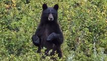 'Friend in the woods': Missing US boy says bear kept him safe