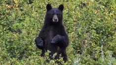 Missing US boy Casey Hathaway says bear kept him safe