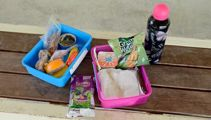 Families turning to foodbanks raises questions about school lunches