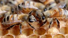 Michelle Dickinson: Study finds bees can perform simple maths