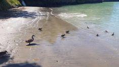 Strange tides at Lyttleton spark call to tsunami experts