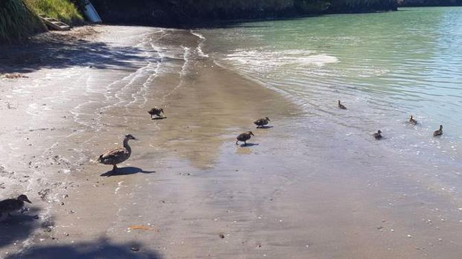 Governors Bay near Lyttleton yesterday afternoon - where strange tides prompted a call to tsunami experts. (Photo / Rosie Belton)