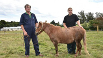 Miniature horse dies after stabbing attack