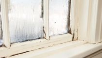 Preventable sickness due to damp, mouldy homes costing NZ $145m