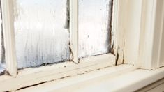Preventable sickness due to damp, mouldy homes costing New Zealand $145 million