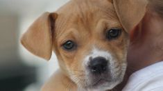 Should we ban pets shops from selling pups and kittens?