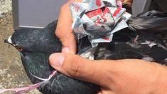 SPCA continuing to investigate bizarre case of bird abuse