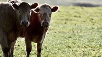 Farmers to be hit hard with proposed capital gains tax