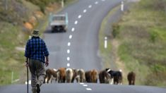 Mike Hosking: Hats off to a farmer who tells it like it is