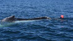 Whale entangled in fishing gear freed in Kaikōura