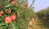 In Nelson, where the apples need picking, under-utilisation is at 12.5 per cent, participation rate is at 69 per cent, those on Jobseeker benefits is 1300. Photo / File.