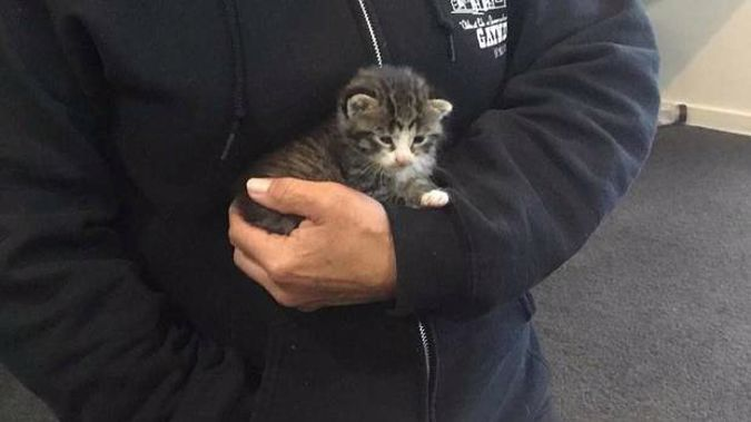 Nathan Gunn rescued this kitten from a drain at his school. (Photo / Supplied)