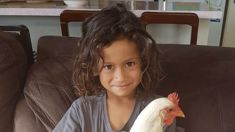 Murder most fowl: Mangonui family devastated over pet's death