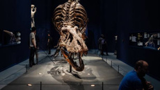 Scientist outraged over sale of smallest T.Rex skeleton in the world