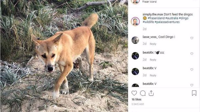 'Don't feed the dingoes.' Photo / Instagram