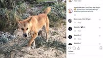 Tourists brag about dingo pictures days after toddler attack